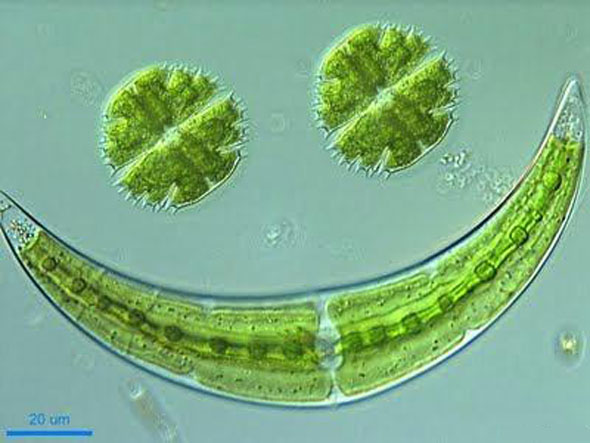 do archaebacteria use chemosynthesis